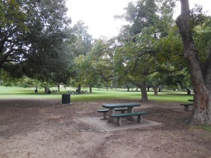 Park area where I collected ants